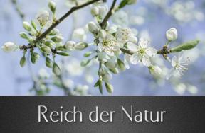 Reich der Natur